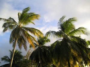 Caribbean storm